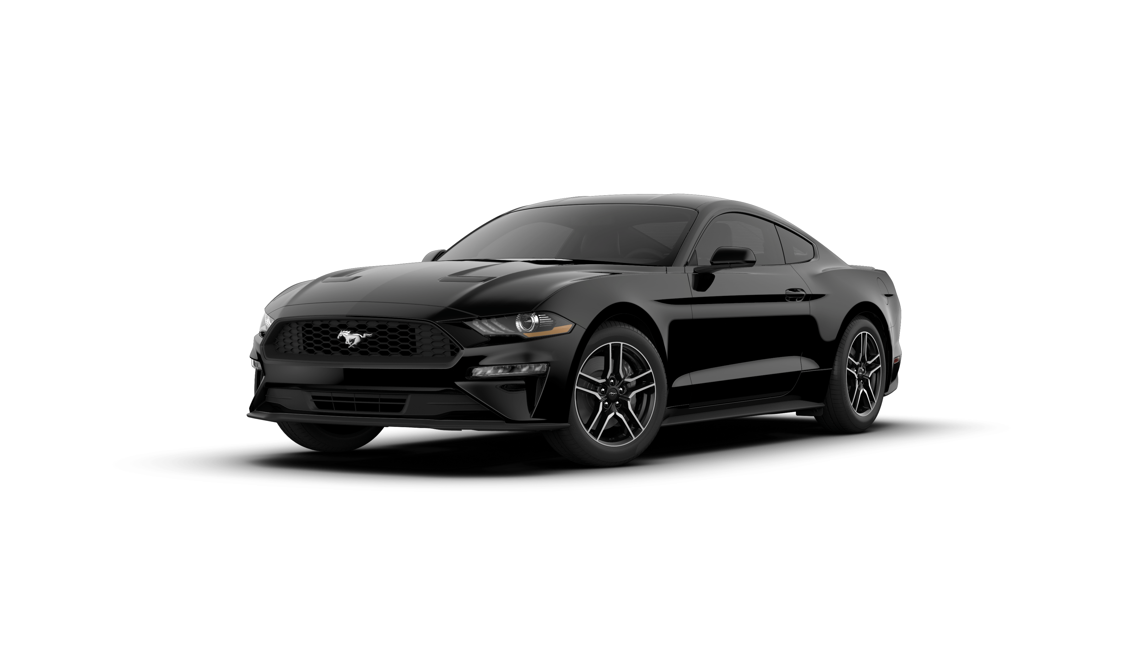 Shadow Black 2019 Ford Mustang for Sale at Ciocca Ford VIN